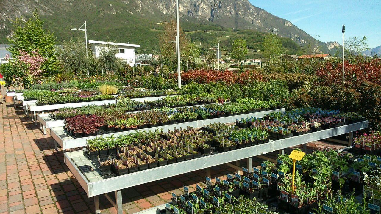 Piante Per Aiuole Perenni spazioverde propone piante perenni a trento | spazioverde